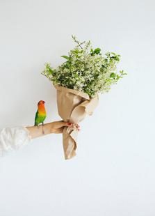 Parrot And A Girl