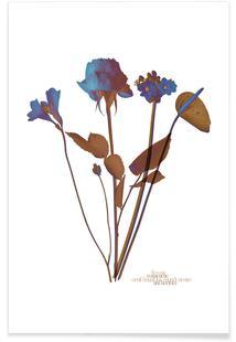 Ode aux Fleurs (Blue)