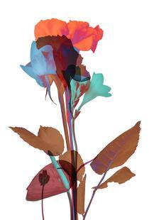 Ode aux Fleurs (Orange-Blue-Mint)