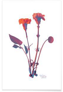 Ode aux Fleurs (Orange)