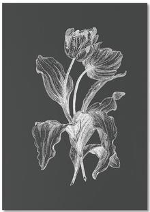 Tulips - White on Grey