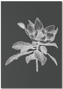 Magnolia - White on Grey