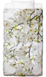 Magnolia Tree White