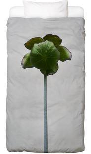 Staub - Schlauchpflanze