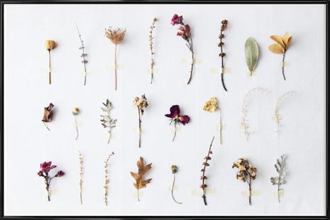 Flora Study