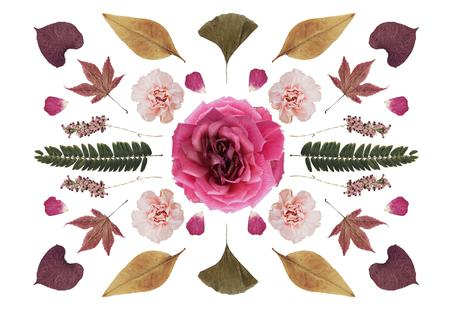 Botanical N1