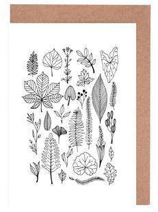 Herbarium Line Drawing