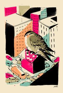 Giants Birdy