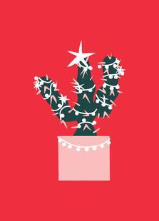 Christmas Cactus 2