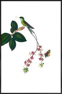 Bird of Paradise #14