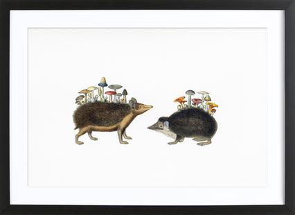 Hedgehog Shrooms