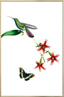 Bird of Paradise #15