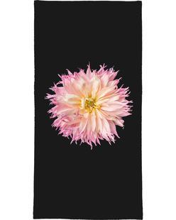 Pink Star Dahlia