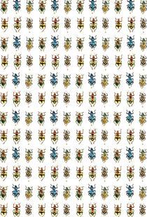 Tiny Beetles
