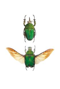 Insect 2