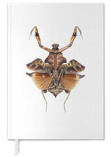Insect 5