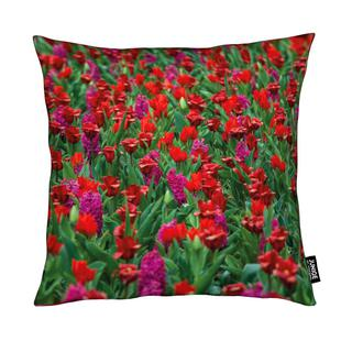 Tulip Field Red