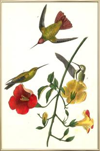 American Bird (by List Collection)