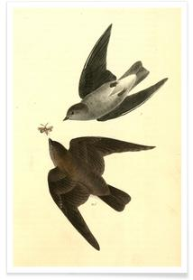 Rough-winged Swallow (by List Collection)
