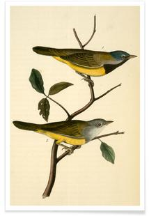 Macgillivray's Ground-Warbler (by List Collection)