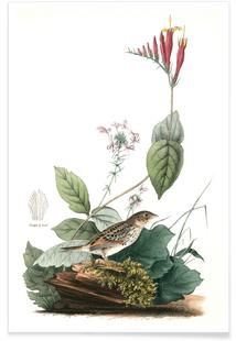 Henslow's Bunting (by List Collection)