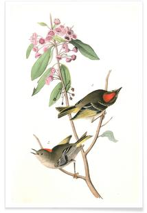 Ruby-crowned Kinglet (by List Collection)
