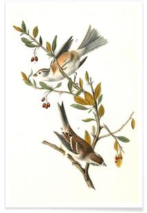 Canada Bunting (Tree Sparrow) (by List Collection)