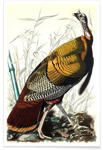 Great American Cock, 1827 (by List Collection)