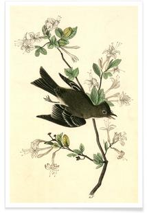 Wood Pewee Flycatcher (by List Collection)