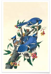 Blue Jay, 1831 (by List Collection)