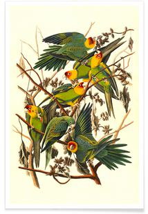 Carolina Parrot, 1827 (by List Collection)
