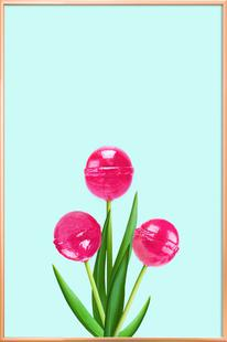 Lollipop Tulips 2