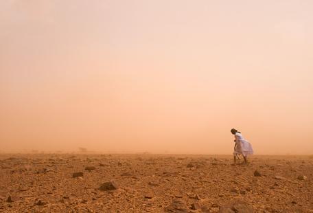 Camels Sahara