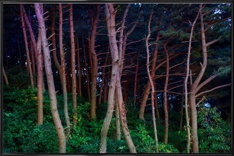 Busan Trees