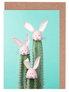 Bunny Cactus