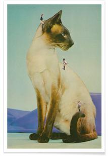 Siamese Mega Cat