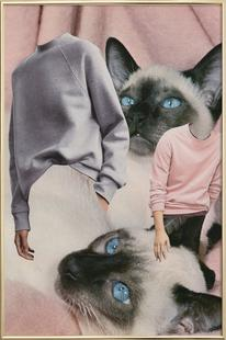 Siamese Sweaters