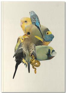 Budgies and Fish