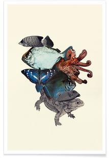 Reptiles and Sea Creatures