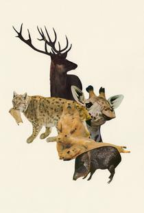 Stag and Other Mammals