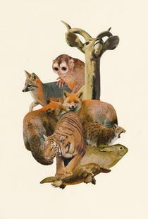 Tigers, Foxes and Other Mammals