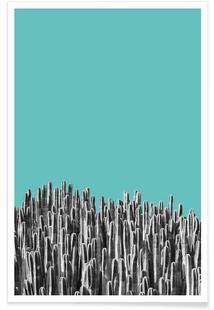 Cacti 01