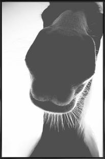 A Horse of Course No.1