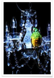Birds Everywhere 3