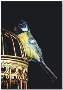 Birds Everywhere 9