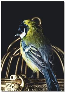 Birds Everywhere 10