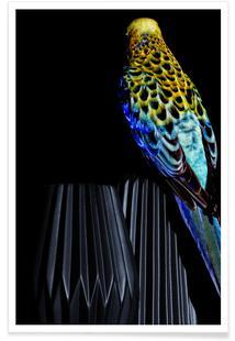 Birds Everywhere 20