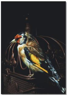 Birds Everywhere 22