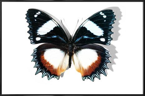 Butterflies 13