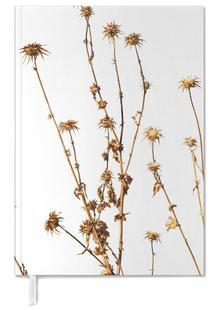 Flora - Mariendistel